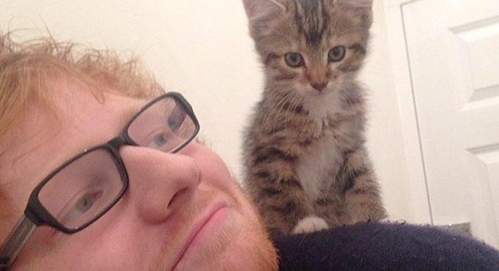 Los gatitos de Ed Sheeran ya tienen su propio Instagram