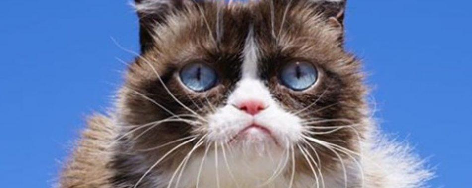 Falleció Grumpy Cat :'(