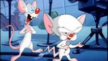 Animaniacs y Pinky y Cerebro podrían regresar este año