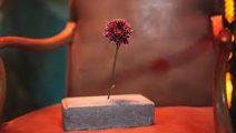 Drefquila sorprende con Una Flor En El Cemento